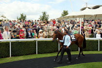 29-07-2010 - Horses are paraded around by handlers the winners enclosure at Goodwood racecourse. © Justin Tallis