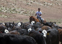 05-07-2011 - Riders move cattle to a new pasture on the Baker Ranch, Nevada, USA © Jim West