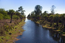 14-02-2014 - Naples, Florida - A canal in the Picayune Strand State Forest near Everglades National Park, where the Army Corps of Engineers is in the midst of a wetlands restoration project that is part of the Com... © Jim West