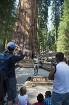 26-06-2012 - Sequoia National Park, California - A volunteer park ranger in Sequoia National Park talks to visitors about the General Sherman, the world's largest living tree, a giant sequoia (Sequoiadendron gigan... © Jim West