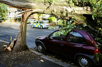 28-10-2013 - A tree that has fallen onto a parked car. The morning after the storm in Brighton and Hove, East Sussex. © Nick Rain
