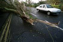 27-10-2002 - A tree falls on to the road in Clevedon, near Bristol during a storm © Paul Box