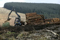 15-02-2011 - Afan forest, South Wales. Phytophthora ramorum - a devastating fungal pathogen - is causing widespread damage to trees in the UK. A machine stacks Larch logs. © Paul Box