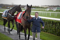 09-12-2011 - Stablehand leading a racehorse. National Hunt meeting at Doncaster racecourse. © Philip Wolmuth