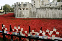11-11-2014 - Armistice Day on the 100th Anniversary of the year in which the First World War began. Poppies and crosses are laid by the public to remember the war dead on the gates of the Tower of London; all arou... © Stefano Cagnoni