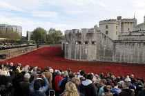 11-11-2014 - Visitors to the art installation at the Tower of London on Armistice Day, the 100th Anniversary of the year in which the First World War began. The moat displays the 888,246 ceramic poppies, the compl... © Stefano Cagnoni