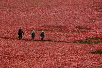 11-11-2014 - Armistice Day on the 100th Anniversary of the year in which the First World War began. Two children walk with their mother in the Tower of London moat between the 888,246 ceramic poppies, the complete... © Stefano Cagnoni