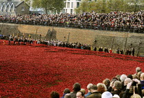 11-11-2014 - Armistice Day on the 100th Anniversary of the year in which the First World War began. Crowds gather in preparation for the Two Minute Silence to remember the war dead at the Tower of London. In the m... © Stefano Cagnoni