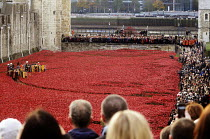 11-11-2014 - Two Minute Silence to remember the war dead on Armistice Day on the 100th Anniversary of the year in which the First World War began. In the moat at the Tower of London lie 888,246 ceramic poppies, th... © Stefano Cagnoni