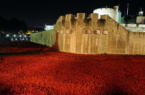 12-11-2014 - Art installation, floodlit at night, by Paul Cummins in the moat at the Tower of London to commemorate one hundred years since the start of the First World War. 888,246 ceramic poppies, each represent... © Stefano Cagnoni