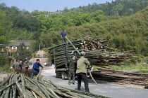 15-04-2014 - Workers loading a lorry with bamboo trunks, Moganshan, China © Timm Sonnenschein