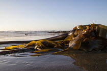 03-09-2016 - Fort Bragg, California, Sunset on the beach © David Bacon
