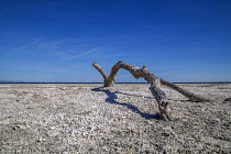04-04-2017 - Coachella Valley California, USA The Salton Sea, an artificial sea below sea level created in the desert between the Coachella and Imperial Valleys by the accidental diversion of the Colorado River. T... © David Bacon