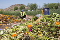 16-04-2017 - Tucson, Arizona - The Compost Cats, a University of Arizona student organization, composts food waste from the city of Tucson, diverting it from landfills. The compost is sold for use on farms and gar... © Jim West