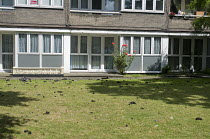 14-06-2017 - Grenfell Tower Fire. Clumps of ash that have fallen from the fire at Grenfell Tower litter the communal gardens of neighbouring coucil estates © Stefano Cagnoni