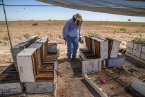 17-08-2017 - Imperial Valley, California, USA A beekeeper, working with hives south of the Salton Sea. Bees are under stress because of increased salt dust from the receeding waters of the lake © David Bacon
