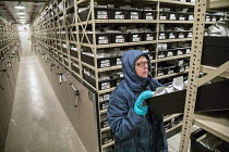 24-08-2017 - Fort Collins, Colorado, USA Biological science technician looking for seeds stored at 0 degrees F in a freezer, National Laboratory for Genetic Resources Preservation. The Laboratory is part of the De... © Jim West