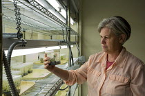24-08-2017 - Fort Collins, Colorado, USA The National Laboratory for Genetic Resources Preservation, part of the Department of Agriculture. Research leader Dr Christina Walters examining plants in a walk in germin... © Jim West