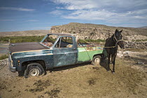 05-11-2017 - Boquillas del Carmen, Coahuila, Mexico, A horse hitched to a disused pickup truck in the small border town overlooking the Rio Grande border © Jim West