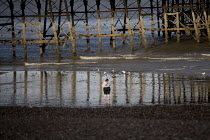 28-07-2018 - Woman paddling under Eastbourne Pier, East Sussex © Jess Hurd