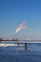 01-02-2019 - Marine City, Michigan, USA: DTE Energy coal and oil fired St. Clair power station on the U.S. side of the ice filled St. Clair River. Canvasback ducks swim in open water near shore © Jim West