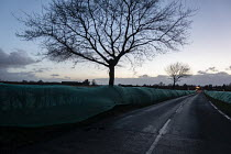 03-03-2019 - Green netting preventing birds from nesting in the hedgerow prior to construction commencing. Should the consent to remove the hedgerow be granted to the construction company during the bird breeding... © John Harris