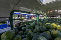 08-05-2019 - Immokalee, Florida, USA: Migrant workers unloading watermelons onto conveyer belts, Pequeno Harvesting packing shed. The melons are transported from the fields in old buses from which seats and window... © Jim West