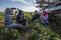 13-11-2019 - Coachella Valley, California, USA: Farmworkers picking green beans. Checker weighing picked beans. Workers taking a break next to the harvester © David Bacon