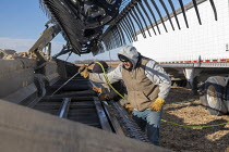 05-11-2019 - North Dakota, USA Workers cleaning a combine harvester, soybean harvest, Noeske Seed Farm. The combine had become clogged when it picked up early morning frost. © Jim West