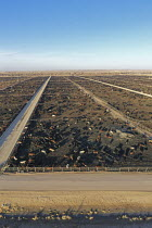 07-11-2019 - Kersey, Colorado, USA Cattle feedlot, Five Rivers Cattle. It has a capacity of 98,000 cattle © Jim West