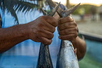 04-02-2020 - Puerto Escondido, Oaxaca, Mexico, customers arriveing on the beach at dawn to buy fresly caught fish from the crews of small fishing boats. A man holding two fish he has bought. © Jim West