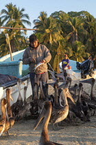 04-02-2020 - Puerto Escondido beach, Oaxaca, Mexico, customers arriving at dawn to buy fresly caught fish from the crews of small fishing boats. A fisherman feeding the pelicans. © Jim West
