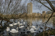 03-12-2019 - New housing on West Hendon Estate overlooking Brent Reservoir. Tenants and leaseholders in 680 properties were moved out to make way for a 2000 home development by Barratts and Barnet Council, only 20... © Philip Wolmuth