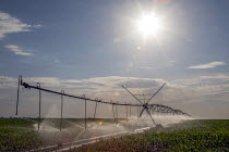 03-07-2020 - Colorado, USA. Irrigating crops using a center pivot irrigation system on farm in Weld County. The area gets only 15 inches of rain per year, so water for irrigation is diverted from the western side... © Jim West