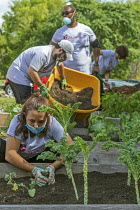 05-09-2020 - Detroit, USA Volunteers working in Grassroots Garden, a Morningside community garden in a low income area of Detroit. Vacant Lots into Gardens. MorningSide is a volunteer organization of residents © Jim West