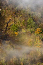 22-11-2020 - Autumnal trees, Avon Gorge, Bristol. Leaves turning yellow and red © Paul Box
