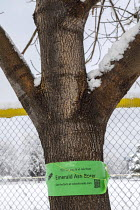 22-03-2021 - Colorado USA: Emerald Ash Borer warning sign on an ash tree. Emerald Ash Borer is an invasive species which has killed many millions of ash trees in the USA. A green buprestid or jewel beetle native t... © Jim West